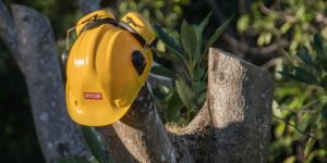 Picking The Top Tree Removal Company – Avoid Hassle And Extra Costs