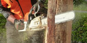 Why You Should Start Looking for a Newer Chainsaw Model – A Quick Overview